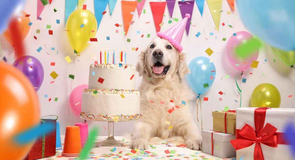 Собака поздравляет с днем рождения