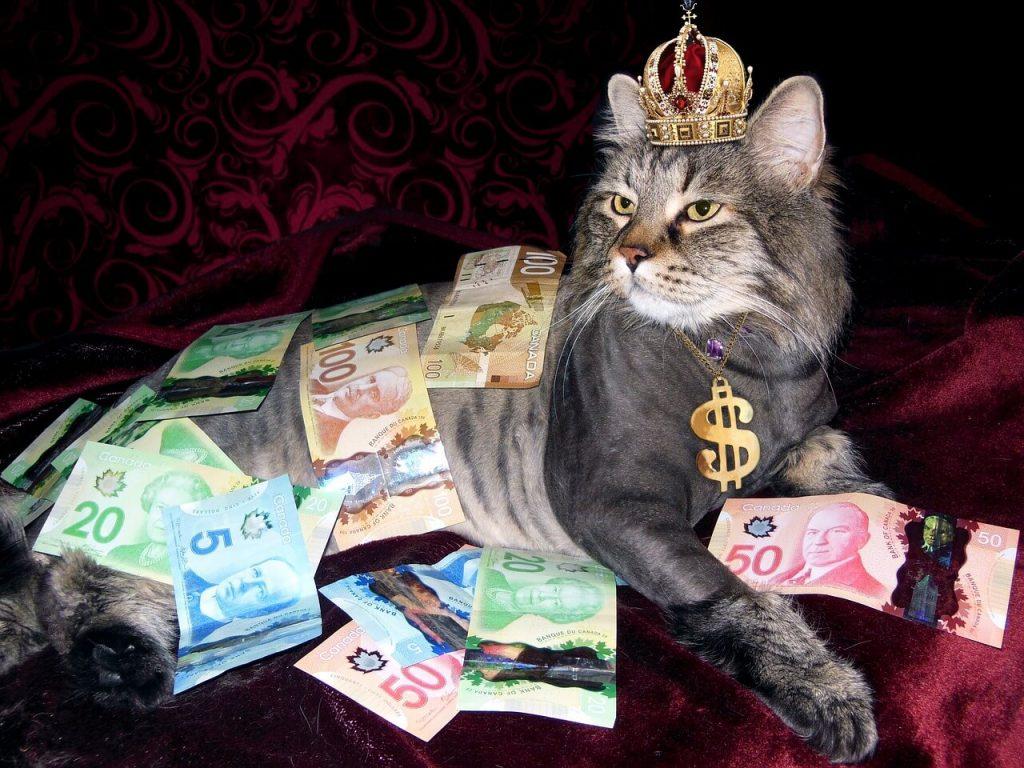 Крутой кот в деньгах