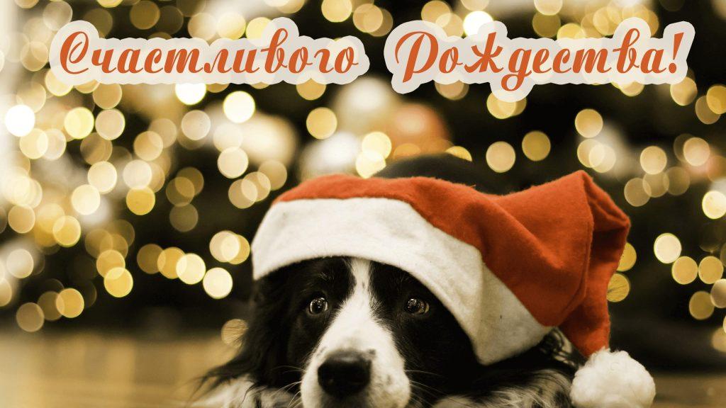 Веселая собачка с Рождеством