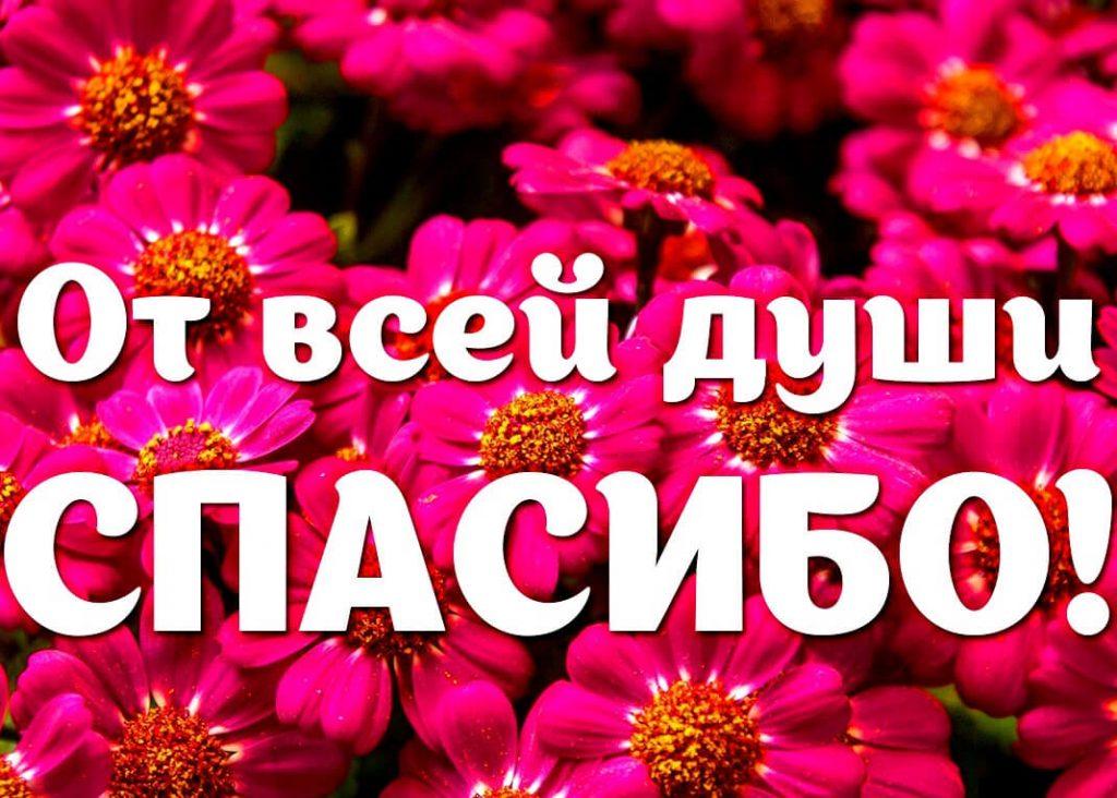 От всей души спасибо и цветы