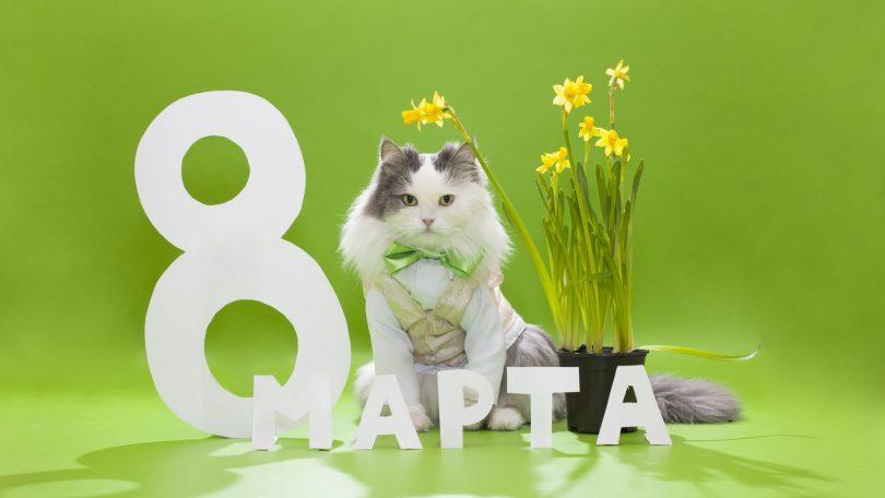 Красивая картинка с 8 марта кот