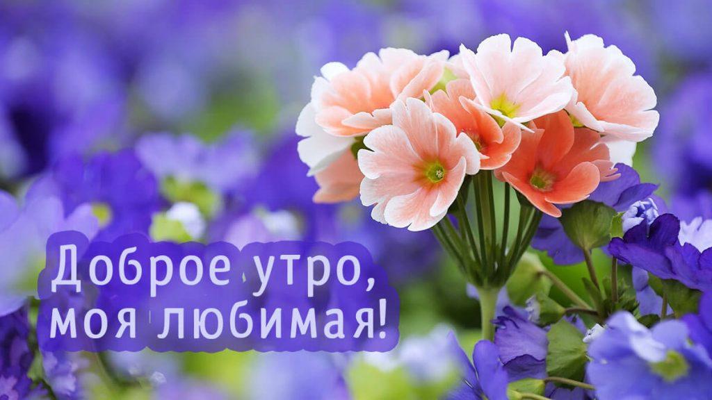 Цветы с добрым утром любимой